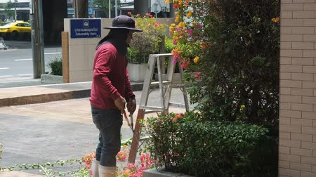 Bangkok, Thailand - May 8, 2019: Gardener cut branches for decoration on the street of Bangkok. A gardener mows a large bougainvillea bush in a big city by hand with large garden shears.