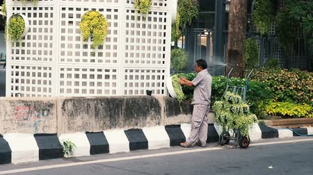 Bangkok, Thailand - May 8, 2019: Greening of Bangkok city. A gardener decorates the streets of the city with greenery. Male worker plants live plants near a big city in a big city.