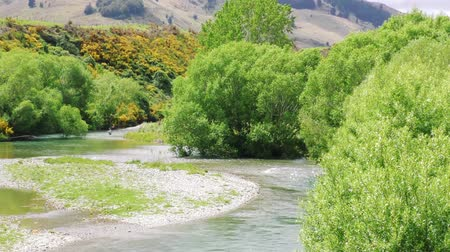 idaho : Fly fisherman in pristine New Zealand river. Wide shot.