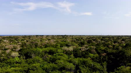 Luchtfoto van de weelderige Yucatan-jungle, Quintana Roo, Mexico Stockvideo