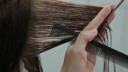 kadeřník : Hairdresser trimming brown hair with scissors, HD