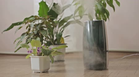 ionizing : Woman turning on humidifier for flowers