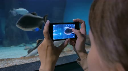 shark : Woman taking pictures of fishes with smartphone. Technology and entertainment concept Stock Footage
