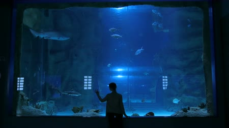 podwodny swiat : Woman stay near big aquarium tank, watching the fish. Tourism and entertaiment concept