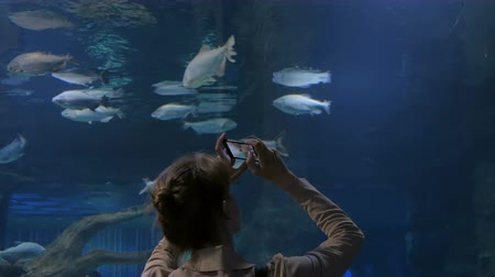 submerge : Woman taking pictures of fishes with smartphone. Technology and entertainment concept Stock Footage