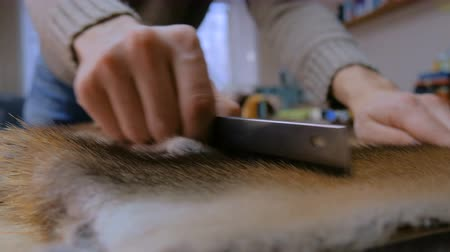 mink : Professional male skinner, furrier working with mink fur skin at atelier, workshop. Fashion and leatherwork concept Stock Footage