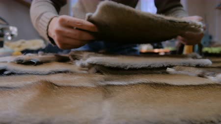 mink : Professional male skinner, furrier matching colours of mink fur skin at atelier, workshop. Fashion and leatherwork concept Stock Footage