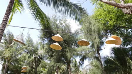 lâmpada : Lamps with abages from Vietnamese caps hang on a wire among coniferous trees and palm trees. Summer time.